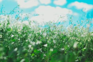 what are the 10 most common allergies